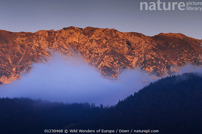 Mist in front of the Piatra Craiului massif, Piatra Craiului National Park, Transylvania, Southern Carpathian Mountains, Romania, October 2008, CORNELIA DOERR,DAWN,EASTERN EUROPE,EUROPE,FORESTS,LANDSCAPES,MIST,MOUNTAINS,NP,ORANGE,RESERVE,TREES,WWE,National Park,PLANTS, Wild Wonders of Europe / Döerr