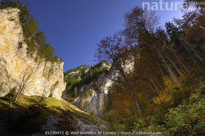 Limestone rocks in Valea Padina lui Calinet, Piatra Craiului National Park, Transylvania, Southern Carpathian Mountains, Romania, October 2008, CORNELIA DOERR,EASTERN EUROPE,EUROPE,LANDSCAPES,NP,RESERVE,ROCK FORMATIONS,TREES,WWE,National Park,Geology,PLANTS, Wild Wonders of Europe / Döerr