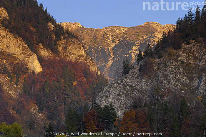 Valea Prapastiilor and Mt. Rock of the King, Piatra Craiului National Park, Transylvania, Southern Carpathian Mountains, Romania, October 2008, CLIFFS,CORNELIA DOERR,EASTERN EUROPE,EUROPE,LANDSCAPES,NP,RESERVE,ROCK FORMATIONS,ROCKS,TREES,WWE,Geology,National Park,PLANTS, Wild Wonders of Europe / Döerr