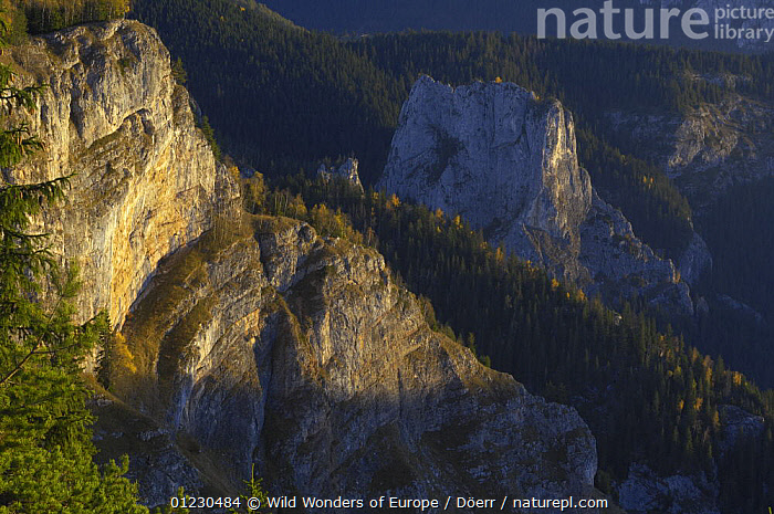 Bicaz Gorges, Cheile Bicazului-Hasmas National Park, Carpathian Mountains, Transylvania, Romania, October 2008, CLIFFS,CORNELIA DOERR,DAWN,EASTERN EUROPE,EUROPE,FORESTS,GEOLOGY,GORGES,LANDSCAPES,NP,RESERVE,ROCK FORMATIONS,WWE,National Park, Wild Wonders of Europe / Döerr