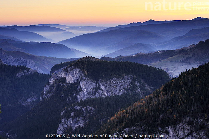 Bicaz Gorges at dawn, Cheile Bicazului-Hasmas National Park, Carpathian Mountains, Transylvania, Romania, October 2008, ATMOSPHERIC,CORNELIA DOERR,COUNTRYSIDE,DAWN,EASTERN EUROPE,EUROPE,FORESTS,GORGES,LANDSCAPES,MIST,NP,RESERVE,ROCK FORMATIONS,SUNRISE,WWE,National Park,Geology, Wild Wonders of Europe / Döerr
