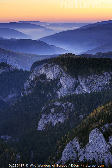 Bicaz Gorges at dawn, Cheile Bicazului-Hasmas National Park, Carpathian Mountains, Transylvania, Romania, October 2008, ATMOSPHERIC,CORNELIA DOERR,COUNTRYSIDE,DAWN,EASTERN EUROPE,EUROPE,FORESTS,GORGES,LANDSCAPES,MIST,NP,ROCK FORMATIONS,SUNRISE,VERTICAL,WWE,National Park,Geology, Wild Wonders of Europe / Döerr