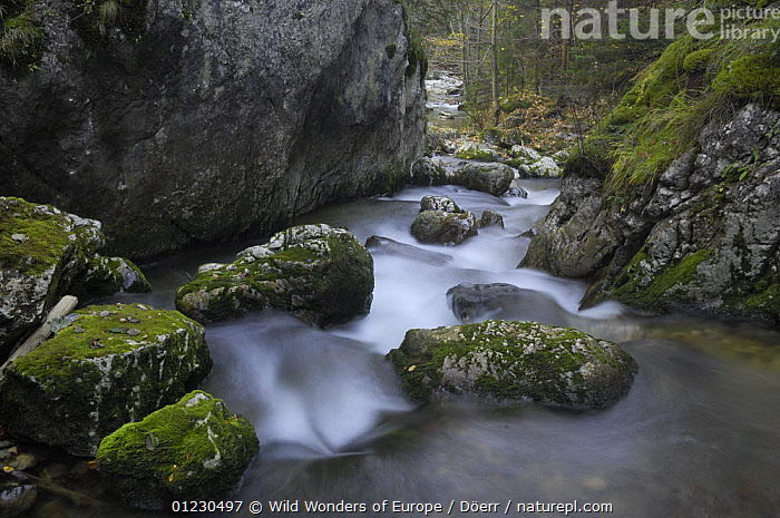 Mountain stream flowing through woodland, Bicaz, Cheile Bicazului-Hasmas National Park, Carpathian Mountains, Transylvania, Romania, October 2008, CORNELIA DOERR,EASTERN EUROPE,EUROPE,FORESTS,LANDSCAPES,MOSS,NP,RESERVE,ROCKS,STREAMS,TREES,WATER,WOODLANDS,WWE,National Park,PLANTS, Wild Wonders of Europe / Döerr