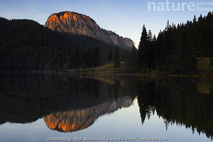 Suhardul Mara-massif (1,507m) reflected in Red Lake at dawn, Cheile Bicazului-Hasmas National Park, Carpathian Mountains, Transylvania, Romania, October 2008, CORNELIA DOERR,DAWN,EASTERN EUROPE,EUROPE,LAKES,LANDSCAPES,MOUNTAINS,NP,REFLECTIONS,RESERVE,SILHOUETTES,TREES,WWE,National Park,PLANTS, Wild Wonders of Europe / Döerr