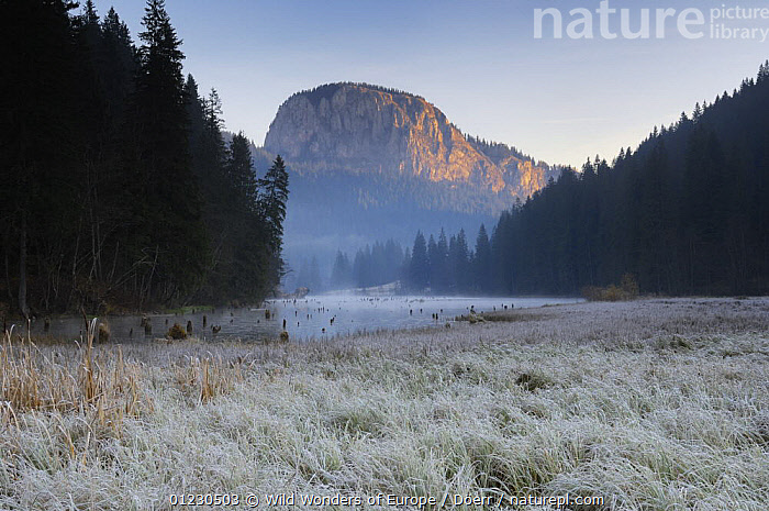 Red Lake and Suhardul Mara-massif (1,507m) at dawn, Cheile Bicazului-Hasmas National Park, Carpathian Mountains, Transylvania, Romania, October 2008, ATMOSPHERIC,CORNELIA DOERR,DAWN,EASTERN EUROPE,EUROPE,LAKES,LANDSCAPES,MIST,MOUNTAINS,NP,RESERVE,TREES,WWE,National Park,PLANTS, Wild Wonders of Europe / Döerr