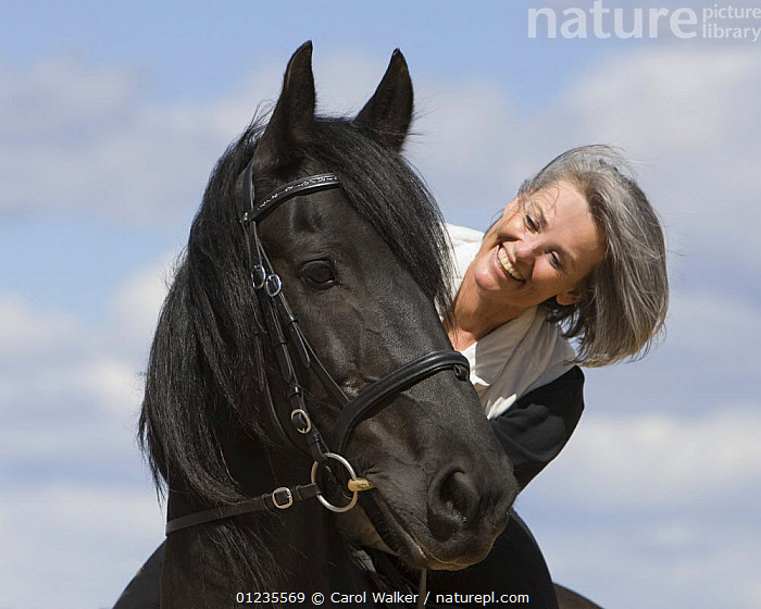 Woman riding purebred black Friesian gelding, USA Model released  ,  HORSE,HORSES,PEOPLE,RIDING,USA,VERTEBRATES,VERTICAL,North America  ,  Carol Walker