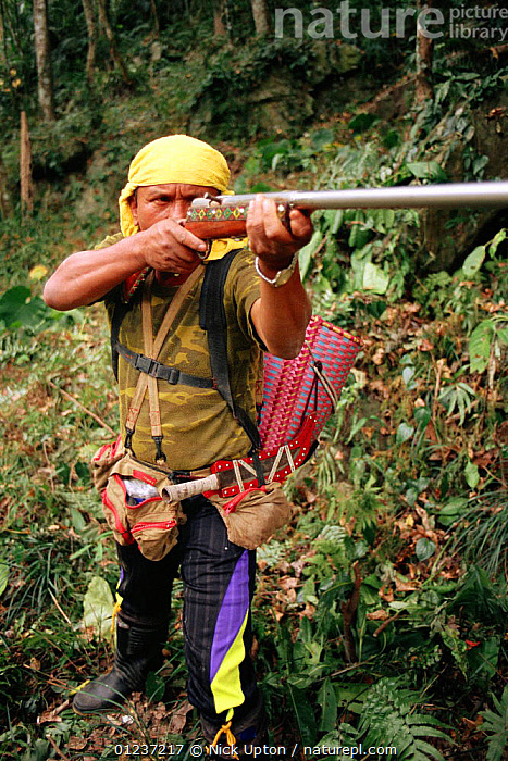 Taiwanese aboriginal hunter of Beinan tribe hunting Formosan macaques (Macaca cyclopis) with home-made gun.  ,  CULTURES,FORESTS,GUNS,HUNTING FOOD,MAN,SOUTH EAST ASIA,TRADITIONAL,TRIBES,Asia  ,  Nick Upton