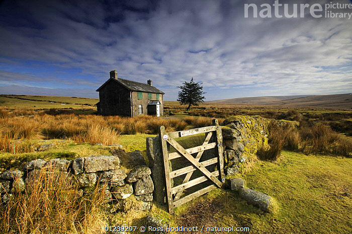 Moorland view of Nun's Cross Farm, dry stone wall and gate, Dartmoor, Devon, UK. February 2009.  ,  ALONE,BUILDINGS,ENGLAND,EUROPE,GATES,LANDSCAPES,MOORLAND,NP,RESERVE,STONES,UK,WALLS,National Park, United Kingdom, United Kingdom, United Kingdom,Catalogue1  ,  Ross Hoddinott