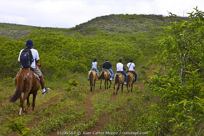 Tourists riding horses to the caldera rim of the Chico Volcano, Sierra Negra, Isabela Island, Galapagos, January 2009  ,  GALAPAGOS,HORSE,HORSES,LANDSCAPES,PEOPLE,RIDING,TOURISM,VEGETATION,SOUTH-AMERICA  ,  Juan Carlos Munoz