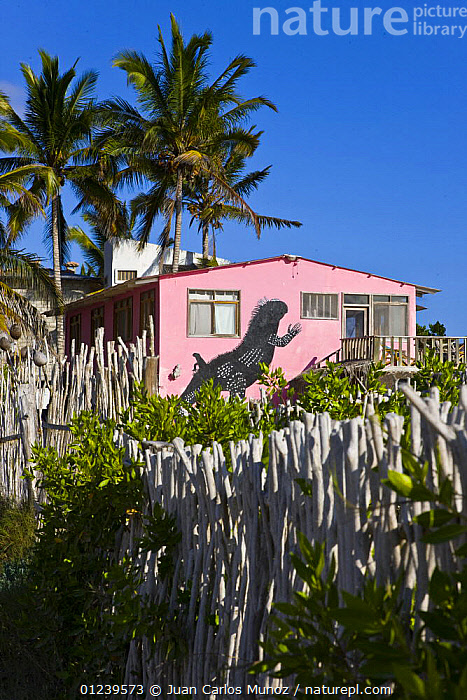 Marine iguana painted on the wall of a Hotel in Puerto Villamil, Isabela Island, Gal�pagos, January 2009  ,  BUILDINGS,GALAPAGOS,LANDSCAPES,PAINTINGS,REPTILES,TOWNS,VERTICAL,VILLAGES,SOUTH-AMERICA,ILLUSTRATIONS  ,  Juan Carlos Munoz