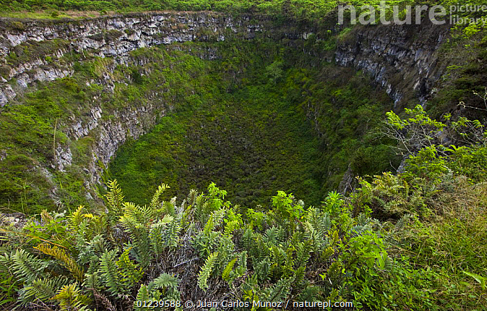 View from the caldera rim of Los Gemelos, Santa Cruz Island, Galapagos, January 2009  ,  GALAPAGOS,HABITAT,LANDSCAPES,PLANTS,VOLCANOES,Geology  ,  Juan Carlos Munoz