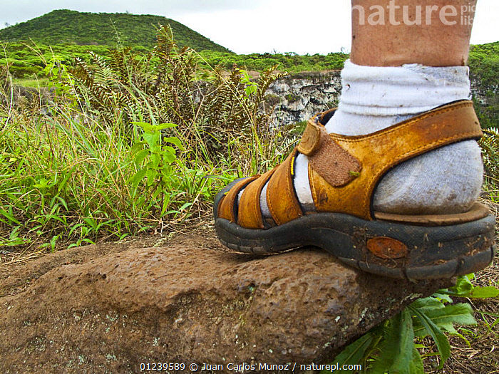 Close up of foot of a hiker on the caldera rim of Los Gemelos, Santa Cruz Island, Galapagos, January 2009. Model released.  ,  ENVIRONMENTAL,EROSION,FEET,GALAPAGOS,LANDSCAPES,PEOPLE,SHOES,TOURISM,SOUTH-AMERICA,Catalogue1  ,  Juan Carlos Munoz