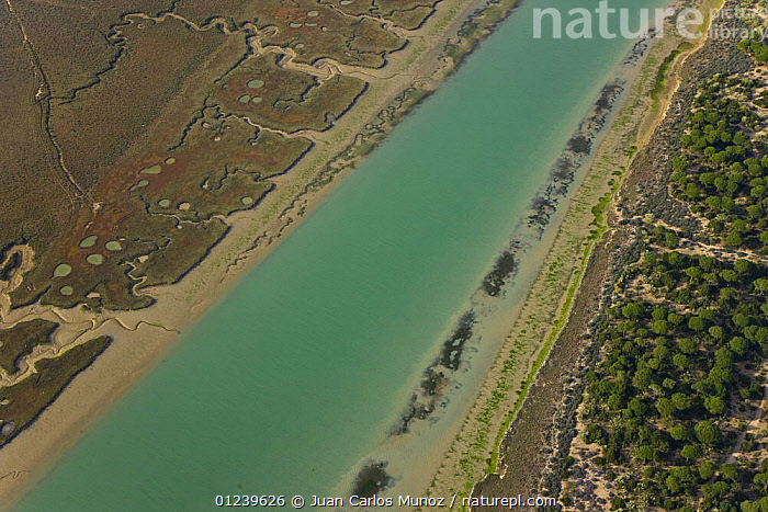 Aerial view of the river and saltmarshes of the Bahia / Bay de Cadiz Natural Park, Andalucia, Spain, March 2008  ,  AERIALS,ARTY SHOTS,COASTS,LANDSCAPES,MARSHES,PATTERNS,RESERVE,RIVERS,SALTMARSHES,WETLANDS,Europe  ,  Juan Carlos Munoz