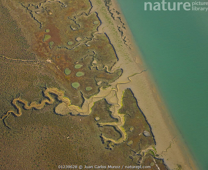Aerial view of the river beds and saltmarshes of the Bahia / Bay de Cadiz Natural Park, Andalucia, Spain, March 2008  ,  AERIALS,ARTY SHOTS,COASTS,LANDSCAPES,MARSHES,PATTERNS,RESERVE,RIVERS,SALTMARSHES,WETLANDS,Europe  ,  Juan Carlos Munoz