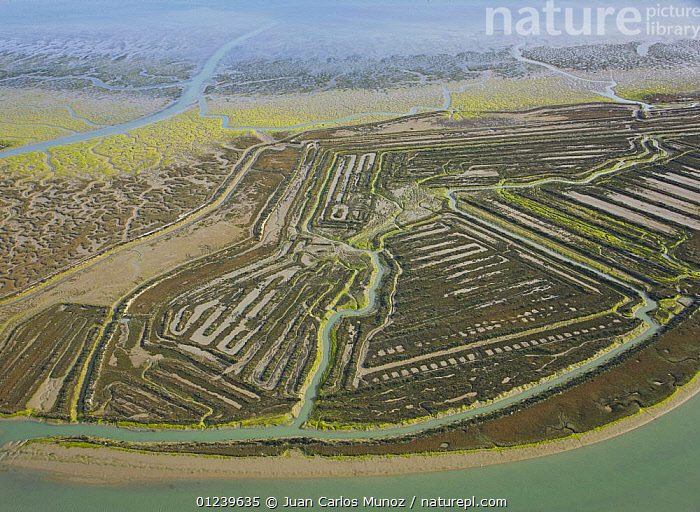 Aerial view of the coast, saltmarshes and disused salt pans of the Bahia / Bay de Cadiz Natural Park, Andalucia, Spain, March 2008  ,  AERIALS,ARTY SHOTS,COASTS,LANDSCAPES,MARSHES,PATTERNS,RESERVE,RIVERS,SALTMARSHES,WETLANDS,Europe  ,  Juan Carlos Munoz
