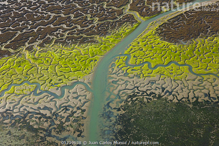Aerial view of the coast, river beds and saltmarshes of the Bahia / Bay de Cadiz Natural Park, Andalucia, Spain, March 2008  ,  AERIALS,ARTY SHOTS,COASTS,LANDSCAPES,MARSHES,PATTERNS,RESERVE,RIVERS,SALTMARSHES,WETLANDS,Europe  ,  Juan Carlos Munoz