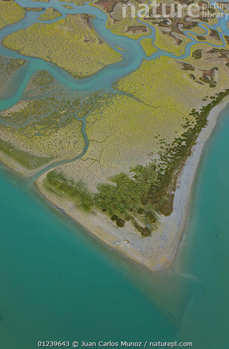 Aerial view of the coast, river beds and saltmarshes of the Bahia / Bay de Cadiz Natural Park, Andalucia, Spain, March 2008  ,  AERIALS,ARTY SHOTS,COASTS,LANDSCAPES,MARSHES,PATTERNS,RESERVE,RIVERS,SALTMARSHES,VERTICAL,WETLANDS,Europe  ,  Juan Carlos Munoz