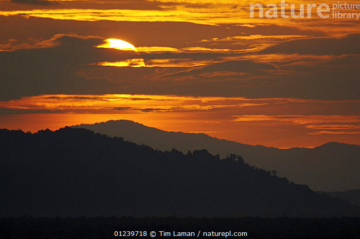 Sunset over the rainforest covered hills of East Sepik Province, Karawari River vicinity, East Sepik Province, Papua New Guinea, August 2005  ,  ASIA,ATMOSPHERIC,CLOUDS,LANDSCAPES,OCEANIA,SILHOUETTES,SOUTH EAST ASIA,SUNSET,TROPICAL RAINFOREST,Weather,NEW GUINEA  ,  Tim Laman