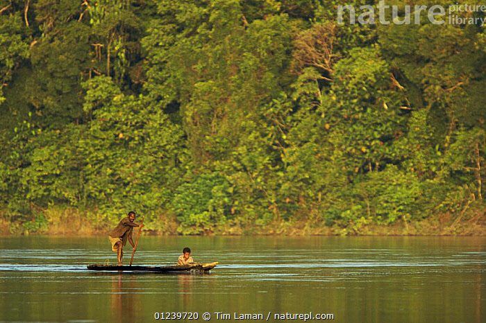 Villagers paddling dugout canoes along the Karawari River, East Sepik Province, Papua New Guinea, August 2005  ,  ASIA,BOATS,CANOES,LANDSCAPES,OCEANIA,PEOPLE,RIVERS,SOUTH EAST ASIA,TROPICAL RAINFOREST,OPEN-BOATS, BOATS,NEW GUINEA, BOATS  ,  Tim Laman