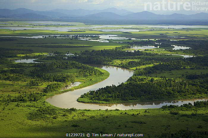 Aerial view of river, rainforest, and seasonally flooded grasslands in the Sepik Basin, East Sepik Province, Papua New Guinea, August 2005  ,  AERIALS,ASIA,LANDSCAPES,OCEANIA,RIVERS,SOUTH EAST ASIA,NEW GUINEA  ,  Tim Laman