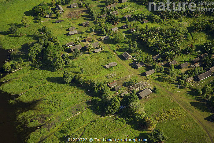 Aerial view of a village along a waterway in the Sepik Basin adjacent to seasonally flooded grassland and rainforest, East Sepik Province, Papua New Guinea, August 2005  ,  AERIALS,ASIA,BUILDINGS,HOMES,LANDSCAPES,OCEANIA,SOUTH EAST ASIA,TREES,VILLAGES,NEW GUINEA,PLANTS  ,  Tim Laman