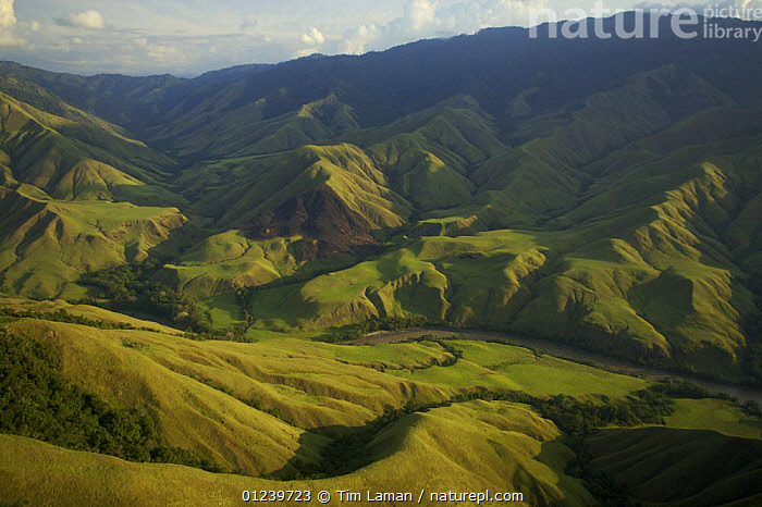 Aerial view of anthropogenic grasslands of the upper Yuat River valley, known as the Jimi Valley, Western Highlands Province, Papua New Guinea, August 2005  ,  AERIALS,ASIA,GRASSLAND,LANDSCAPES,MOUNTAINS,OCEANIA,RIVERS,SOUTH EAST ASIA,NEW GUINEA  ,  Tim Laman