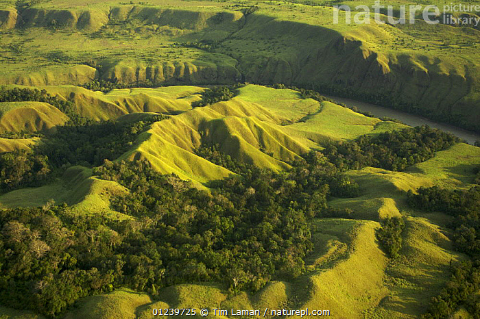 Aerial view of anthropogenic grasslands of the upper Yuat River valley, known as the Jimi Valley, Western Highlands Province, Papua New Guinea, August 2005  ,  AERIALS,ASIA,LANDSCAPES,OCEANIA,RIVERS,SOUTH EAST ASIA,TREES,NEW GUINEA,PLANTS  ,  Tim Laman