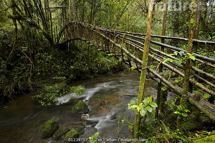 Vine bridge over a stream in montane rainforest, Tari Valley vicinity, Southern Highlands Province, Papua New Guinea, September 2006  ,  ASIA,BRIDGES,LANDSCAPES,OCEANIA,RIVERS,SOUTH EAST ASIA,TROPICAL RAINFOREST,WATER,NEW GUINEA  ,  Tim Laman