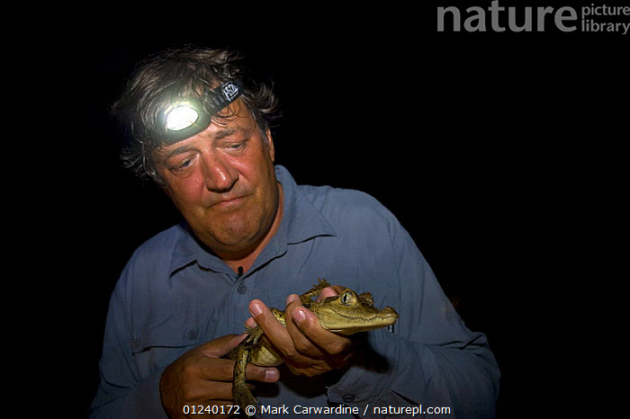 Stephen Fry with Spectacled caiman at night, filming BBC TV series 'Last Chance to See' in the Brazilian Amazon, Jan 2008  ,  BRAZIL,CAIMANS,LIGHTS,NIGHT,PEOPLE,PRESENTER,REPTILES,SOUTH AMERICA,TROPICAL RAINFOREST  ,  Mark Carwardine