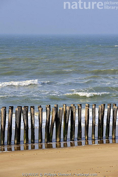 Breakwater made of wooden poles on beach. Oye-Plage, Pas-de-Calais, France.  ,  BEACHES,COASTS,CONSERVATION,ENGLISH CHANNEL,EROSION,EUROPE,FRANCE,LANDSCAPES,NORTH SEA,SEA DEFENCES  ,  Philippe Clement