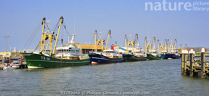 Trawler fishing boats in the harbour of Oudeschild, Texel, the Netherlands, April 2009  ,  BOATS,COASTS,EUROPE,FISHING BOATS,FLEETS,HARBOURS,HOLLAND,LANDSCAPES,MOORED,NORTH SEA,TRAWLERS,WORKING BOATS, WORKING-BOATS , WORKING-BOATS , WORKING-BOATS  ,  Philippe Clement