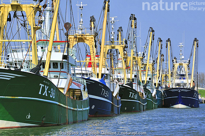 Trawler fishing boats in the harbour of Oudeschild, Texel, the Netherlands, April 2009  ,  BOATS,COASTS,EUROPE,FISHING BOATS,FLEETS,GROUPS,HARBOURS,HOLLAND,LANDSCAPES,MOORED,NORTH SEA,TRAWLERS, WORKING-BOATS , WORKING-BOATS, WORKING-BOATS , WORKING-BOATS , WORKING-BOATS , WORKING-BOATS , WORKING-BOATS ,Catalogue1  ,  Philippe Clement