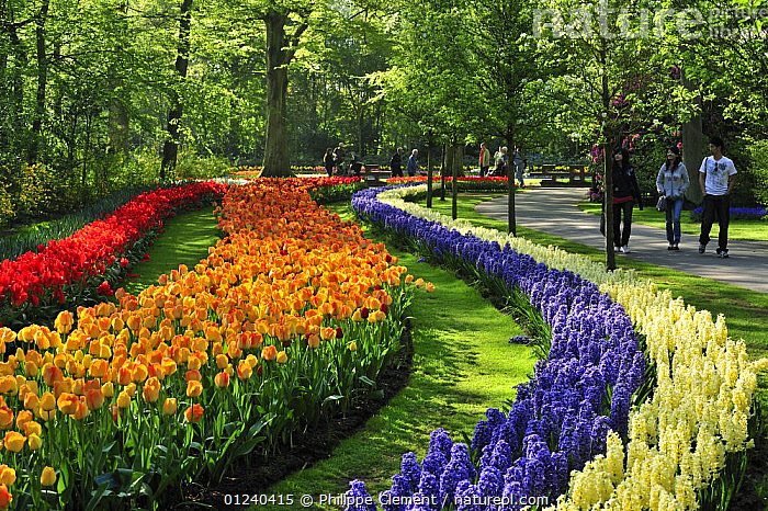 Tourists walking among colourful Hyacinths and Tulips in flower garden of Keukenhof, the Netherlands, April 2009  ,  BULBS,COLOURFUL,CROPS,CULTIVATED,EUROPE,FLOWERS,GARDENS,HOLLAND,LANDSCAPES,PARK,PEOPLE,PLANTS,SPRING,TOURISM  ,  Philippe Clement