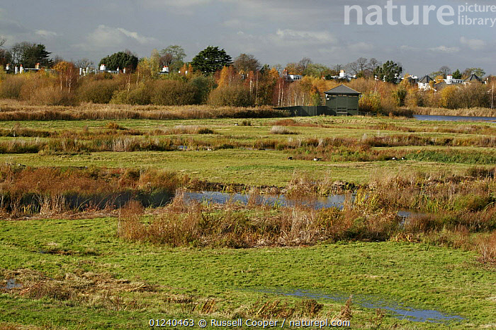 Grazing marsh at the London Wetland Centre, Wildfowl and Wetlands Trust, UK  ,  BIRDS,EUROPE,LANDSCAPES,MARSHES,UK,Wetlands, United Kingdom  ,  Russell Cooper