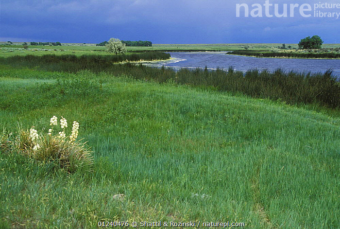 Open grassland landscape with river in eastern Colorado, USA  ,  LANDSCAPES,NORTH AMERICA,RIVERS,USA  ,  Shattil & Rozinski