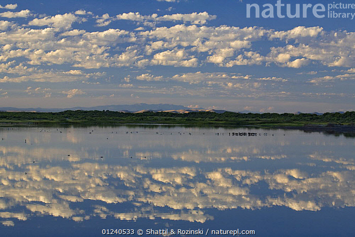 Blanca Wetlands with clouds reflected in water, San Luis Valley, Colorado, USA  ,  CLOUDS,LAKES,LANDSCAPES,NORTH AMERICA,REFLECTIONS,WATER,WETLANDS,Weather,USA  ,  Shattil & Rozinski