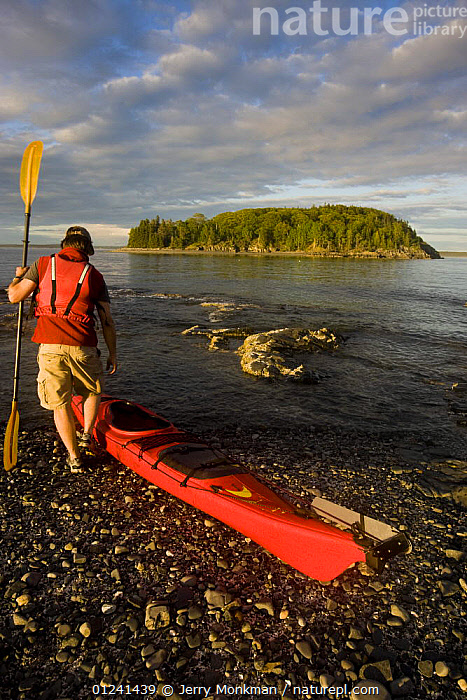 Kayaker about to enter the water, Porcupine Islands, Acadia National Park, Maine, USA. Model Released. June 2008, BOATS,CANOE,CANOEING,COASTS,KAYAK,KAYAKING,LANDSCAPES,LEISURE,MAN,NEW ENGLAND,PEOPLE,RESERVE,USA,VERTICAL,SPORTS, WATERSPORTS, WATERSPORTS,North America, WATERSPORTS, WATERSPORTS, WATERSPORTS, WATERSPORTS, Jerry Monkman