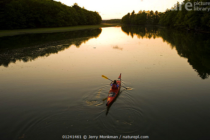 A woman kayaking on the upper reaches of the York River at high tide, sunset, York, Maine, USA. Model Released. May 2008  ,  BOATS,CANOEING,COASTS,HIGH ANGLE SHOT,KAYAKING,LANDSCAPES,LEISURE,NEW ENGLAND,PEOPLE,REFLECTIONS,RESERVE,RIVERS,USA,WATER,SPORTS, WATERSPORTS, WATERSPORTS,North America, WATERSPORTS, WATERSPORTS, WATERSPORTS, WATERSPORTS  ,  Jerry Monkman