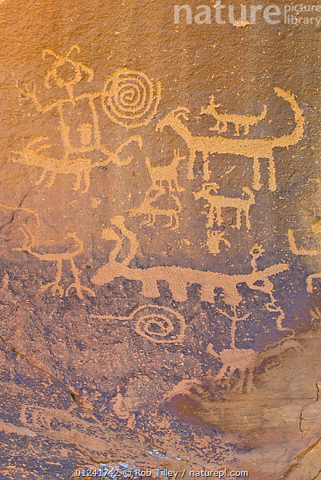 Rock engravings of the native american Pueblo people, Chaco Culture National Historical Park, New Mexico, USA, February 2009, ancient,animal likeness,anthropology,ART,ARTIFACTS,CATALOGUE2,cave painting,Chasco Culture ,close up,Historic,human likeness,Indian,Indigenous tribe,National Historic Park,native american indian,New mexico,Pueblo people,RESERVE,rock art,rock paintings,tribal,USA,VERTICAL,North America ,Tribes,, Rob Tilley