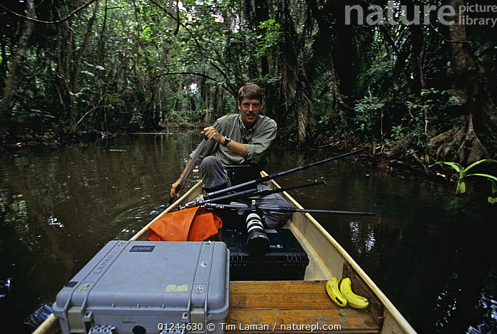 Photographer Tim Laman kayaking with photo equipment down Boom Creek, Belize. Bloodwood trees growing beside stream in mangrove swamp. Model released, ABOARD,BOATS,CANOEING,CANOES,CARIBBEAN,COASTS,LANDSCAPES,MANGROVES,MANGROVE SWAMPS,PEOPLE,PHOTOGRAPHY,PORTRAITS,SPORTS, WATERSPORTS,OPEN-BOATS, BOATS,West Indies, WATERSPORTS, BOATS, Tim Laman