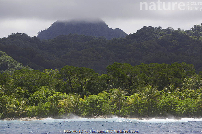 View of the rugged coast of Kostrae Island, Federated States of Micronesia. July 2005, COASTS,FORESTS,LANDSCAPES,MANGROVES,MANGROVE SWAMPS,MICRONESIA,OCEANIA,PACIFIC ISLANDS,TROPICAL RAINFOREST, Tim Laman