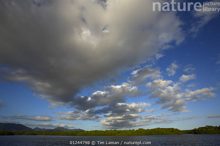 Cumulus cloud formations over the Caroni Swamp in the late afternoon, Caroni Bird Sanctuary, Trinidad, Trinidad and Tobago. February 2006, CARIBBEAN,CLOUDS,COASTS,LANDSCAPES,LOW ANGLE SHOT,MANGROVE,MANGROVES,MANGROVE SWAMPS,RESERVE,SKY,West Indies,Weather, Tim Laman