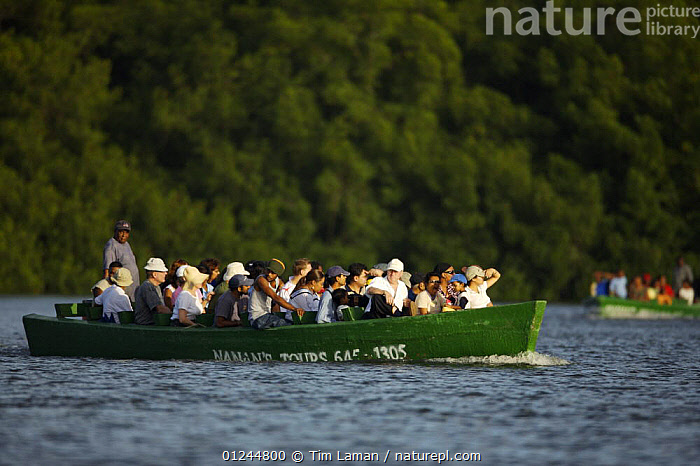 Tourists taking a boat tour of the Caroni Swamp. Caroni Bird Sanctuary, Trinidad, Trinidad and Tobago. February 2006, BIRDWATCHING,BOATS,CARIBBEAN,COASTS,ECOTOURISM,LANDSCAPES,MANGROVE,MANGROVES,MANGROVE SWAMPS,PASSENGER FERRIES,PEOPLE,RESERVE,TOURISM,West Indies, WORKING-BOATS , WORKING-BOATS , WORKING-BOATS, Tim Laman