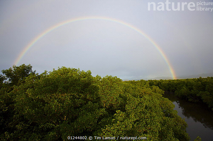 Full rainbow arch over Red mangrove forest {Rhizophora mangle} and river channel in Caroni Swamp. Caroni Bird Sanctuary, Trinidad, Trinidad and Tobago. February 2006  ,  CANOPY,CARIBBEAN,COASTS,LANDSCAPES,MANGROVE,MANGROVES,MANGROVE SWAMPS,RAINBOWS,WEST INDIES,Weather  ,  Tim Laman
