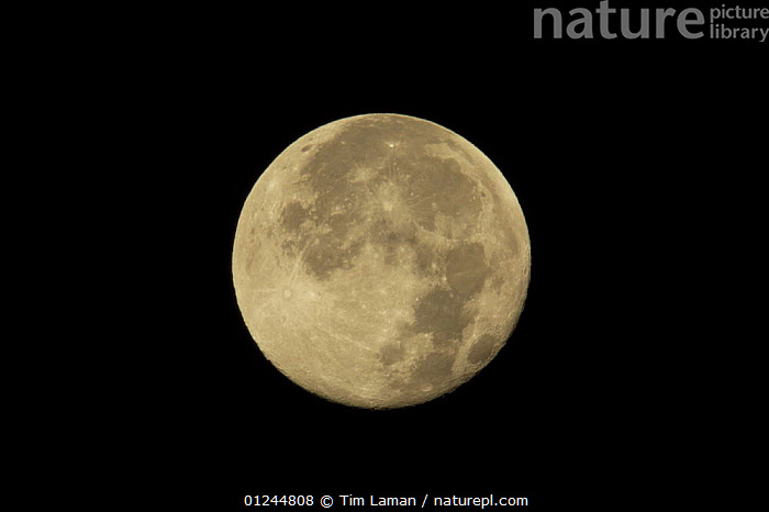 The moon, one or two days after full. Caroni Bird Sanctuary, Trinidad, Trinidad and Tobago. 14th February 2006, CARIBBEAN,MOON,NIGHT,PLANETS,SKY,SPHERE,West Indies,Catalogue1, Tim Laman