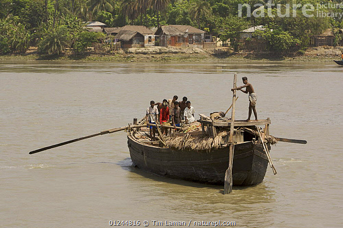 A large freight boat taking goods across river, propelled by oars and manpower, Khulna, Khulna Province, Bangladesh. March 2006, ASIA,BANGLADESH,BOATS,CARGO BOATS ,FREIGHT BOATS,LANDSCAPES,PEOPLE,RIVERS,TRADITIONAL,TRANSPORT,WOODEN,INDIAN-SUBCONTINENT, WORKING-BOATS , WORKING-BOATS, Tim Laman