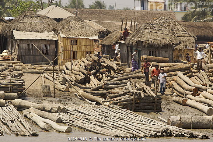 Timber yard beside the Rupsha River, Khulna, Khulna Province, Bangladesh. March 2006, ASIA,BANGLADESH,COMMERCIAL,LOGS,PEOPLE,TRADE,WOOD,INDIAN-SUBCONTINENT, Tim Laman
