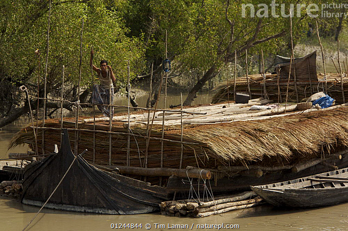 A boat carrying Nipa palm leaves harvested from the mangroves and used for roof thatch, Sibsa river, Sundarbans, Khulna Province, Bangladesh, March 2006, ASIA,BANGLADESH,BOATS,CARGO BOATS ,COASTS,FREIGHT BOATS,MANGROVE SWAMPS,PEOPLE,RIVERS,SUNDARBAN,SUNDARBANS,SUNDERBANS,TRADITIONAL,INDIAN-SUBCONTINENT, WORKING-BOATS , WORKING-BOATS, Tim Laman