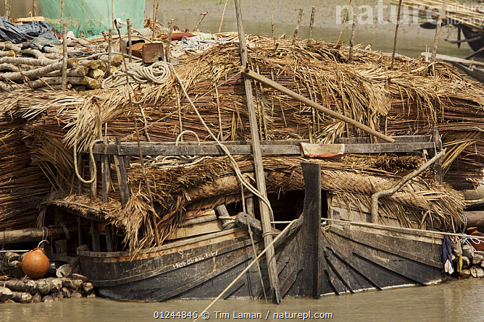 A boat carrying Nipa palm leaves harvested from the mangroves and used for roof thatch, Sibsa river, Sundarbans, Khulna Province, Bangladesh, March 2006, ASIA,BANGLADESH,BOATS,CARGO BOATS ,COASTS,FREIGHT BOATS,MANGROVE SWAMPS,MS,PEOPLE,SUNDARBAN,SUNDARBANS,SUNDERBANS,TRADITIONAL,WOOD,INDIAN-SUBCONTINENT, WORKING-BOATS , WORKING-BOATS, Tim Laman