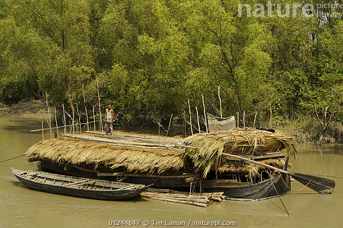 A boat carrying Nipa palm leaves harvested from the mangroves and used for roof thatch, Sibsa river, Sundarbans, Khulna Province, Bangladesh, March 2006, ASIA,BANGLADESH,BOATS,CARGO BOATS ,COASTS,FREIGHT BOATS,LANDSCAPES,MANGROVE SWAMPS,PEOPLE,RIVERS,SUNDARBAN,SUNDARBANS,SUNDERBANS,TRADITIONAL,WOOD,INDIAN-SUBCONTINENT, WORKING-BOATS , WORKING-BOATS, Tim Laman